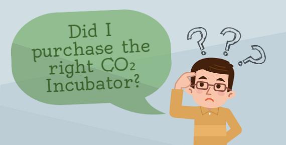 Правильный ли СО2 инкубатор я купил?
